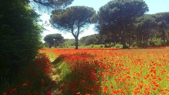 Bella Romagna: 1km vom Hotel entfernt, Pinienwälder