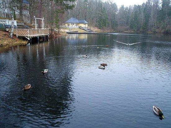 Nelijarve Holiday Centre: озеро у отеля