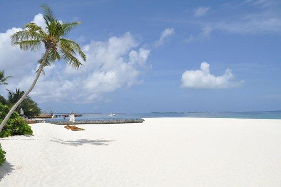 Manafaru Island: Amazing beaches, this near Infiniti and water villas