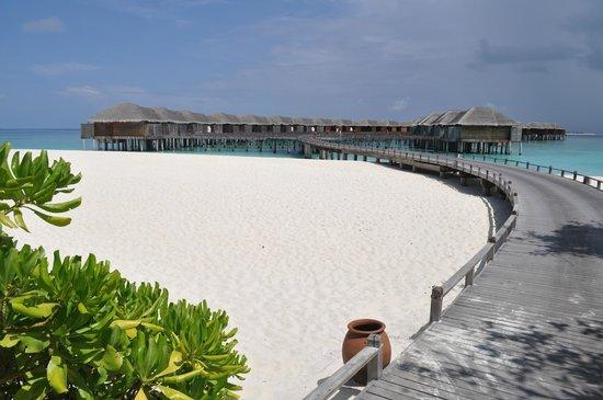 JA Manafaru : View of the water villas