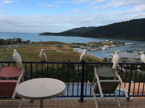 Whitsunday Terraces Resort: Some friendly cockatoos enjoying the view too
