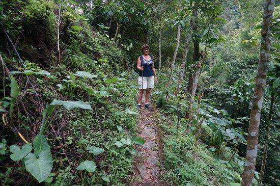 Munduk Moding Plantation: natuurwandeling omgeving munduk