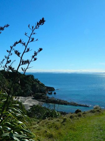 Tiritiri Matangi Island: The views here seriously can't be beat. Tiritiri Matangi May 2014.
