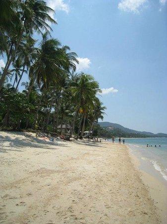 Ban Tai River Gardens Resort : Ban Thai beach
