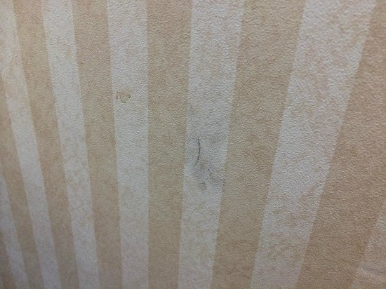 Hampton Inn Detroit / Southgate : Mystery stain on wall