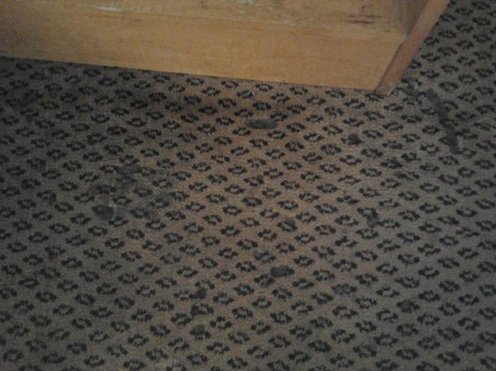 Americana Inn Farmingdale: Filthy Carpet