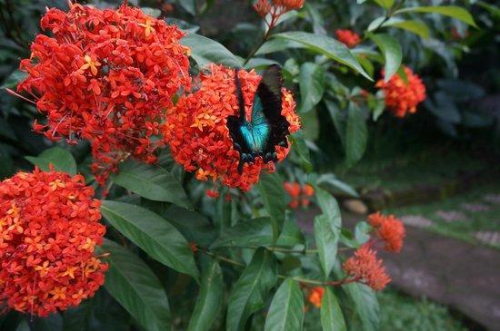 Maya Ubud Resort & Spa: vlindertuin