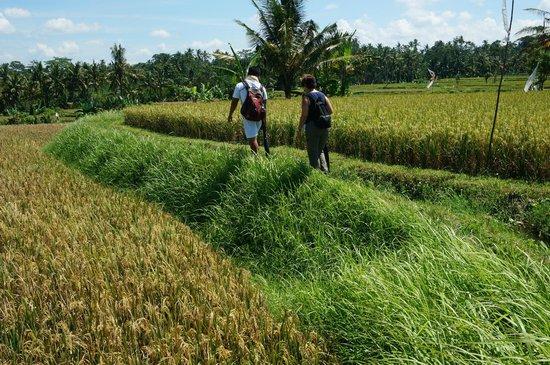 Maya Ubud Resort & Spa: natuurwandeling ubud