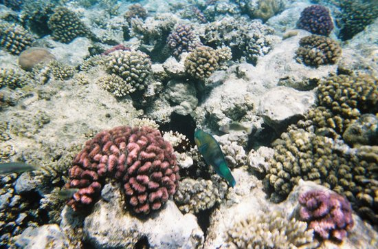 Red Sea Coral Reef Snorkeling at Ras Mohamed National Park with Lunch: Diving.