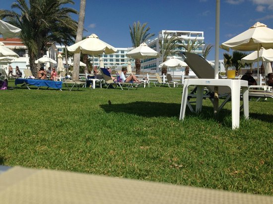 Akti Beach Village Resort : Лежаки