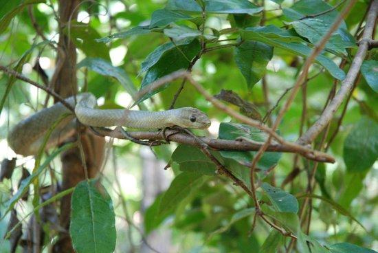 Lokobe Nature Special Reserve: Serpente