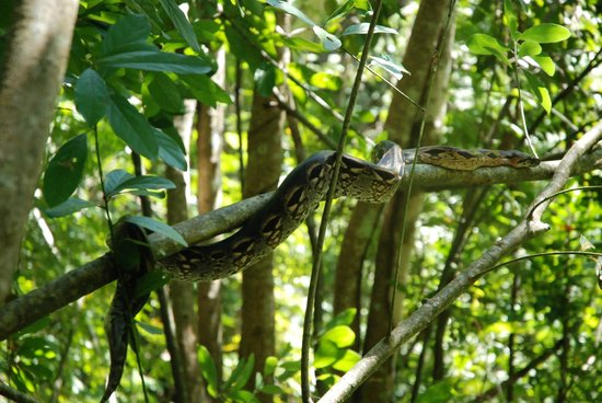 Lokobe Nature Special Reserve: Serpente boa
