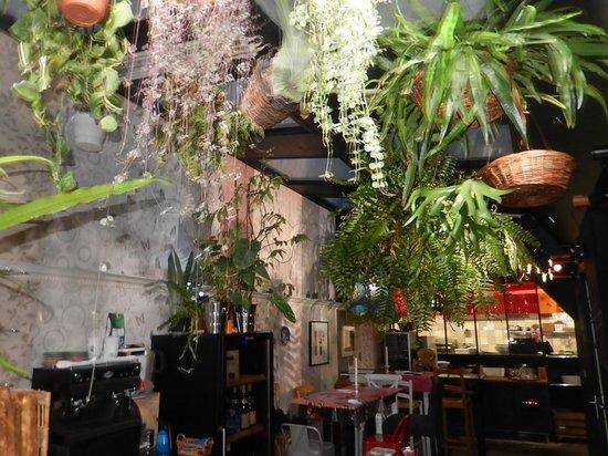 Chez Meme: CHEZ MÉMÉ - Plantes suspendues