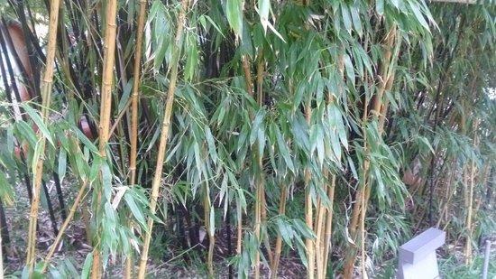 Sheffield Winter Garden: aggh some bamboo