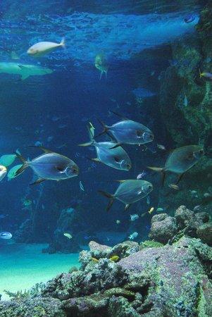 Sea Life Sydney Aquarium : Display of fish