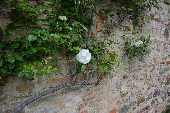 Tenuta Sant'Ilario: white rose