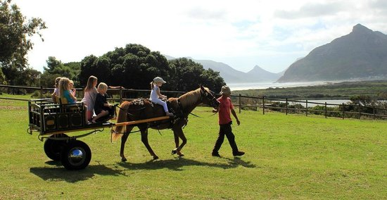 Blue Water Cafe: pony rides
