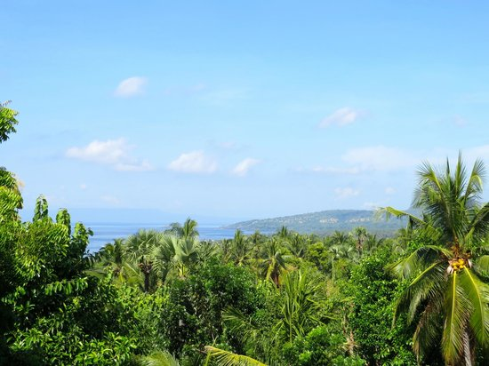 Villa Flow: view from the Coconut house