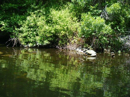 Ellie Schiller Homosassa Springs Wildlife State Park: Turtles