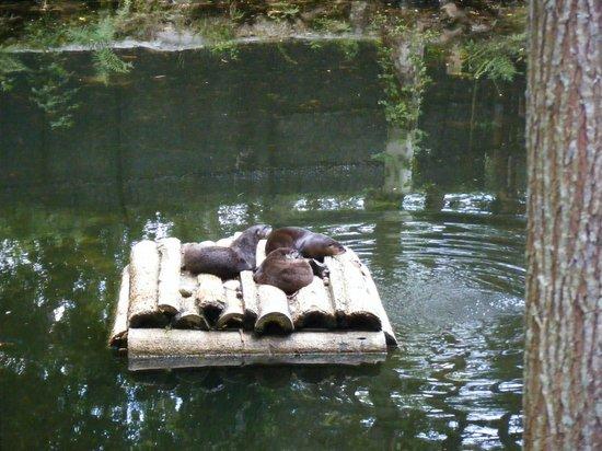 Ellie Schiller Homosassa Springs Wildlife State Park: Otters