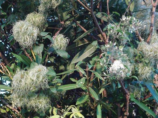 Bella Vista Motel Kaikoura: strange flowers
