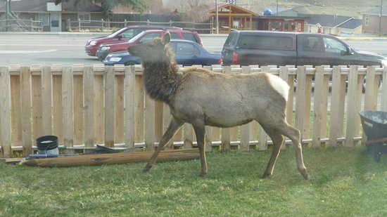 Yellowstone Gateway Inn: Out of our window