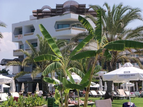 Constantinou Bros Athena Royal Beach Hotel: picture from Cabana on beach looking at suites
