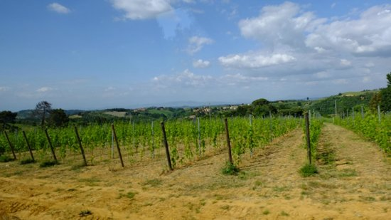 Walkabout Florence Tours : View from the bus in Chianti area