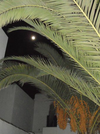 Elisso's Philoxenia: august full moon