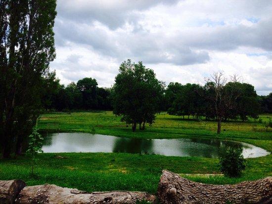 Portets, Франция: Vue depuis l'écurie