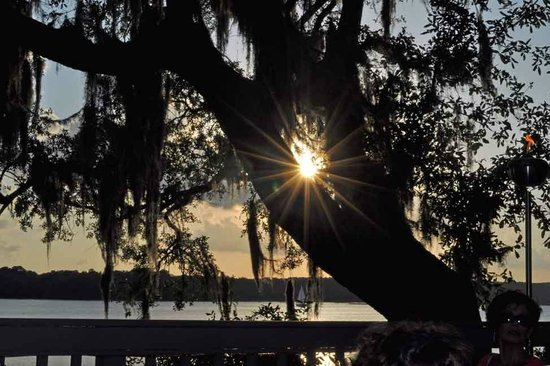 Old Fort Pub : View from our table thru the old live oak