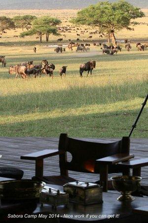 Singita Sabora Tented Camp : Wildlife is on your doorstep