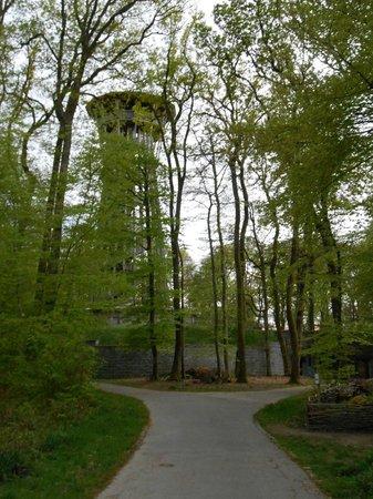Sauvabelin Tower: Dans les bois