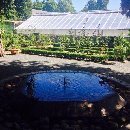Stellenbosch University Botanical Garden: Pond in the middle of the garden
