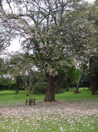 Durban Botanic Gardens: so many paths and places to explore