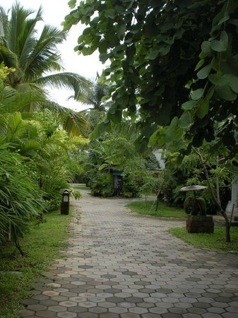 The pathways around the cottages