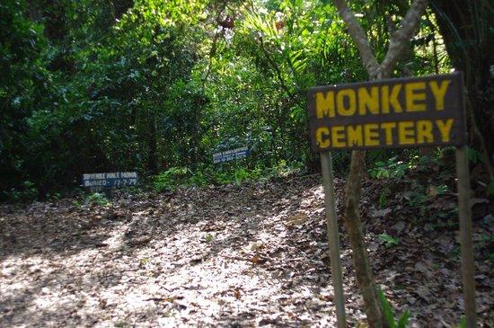 Boabeng-Fiema Monkey Sanctuary : BF@