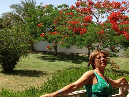 Domina Coral Bay Oasis: Много зелени!