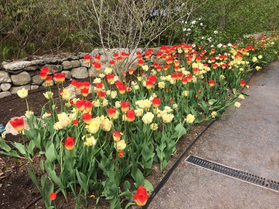 Coastal Maine Botanical Gardens: Thrilling color