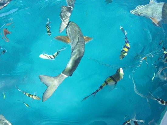 Quicksilver Cruises: RANDOM FISH