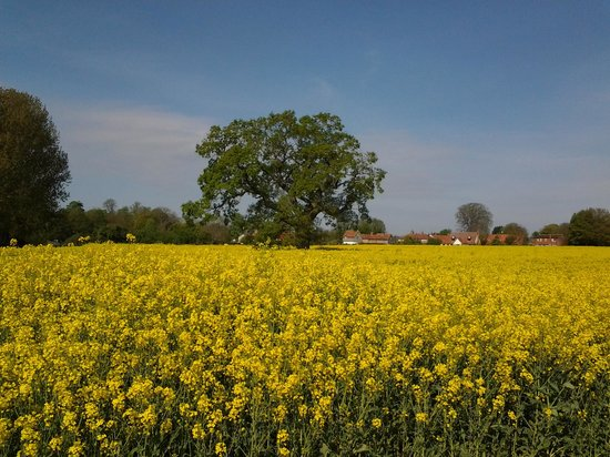 The Bedingfeld Arms: Peaceful and colourful countryside