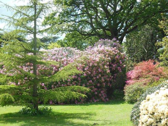 Exbury Gardens & Steam Railway: Exbury Gardens