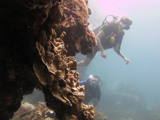 Discovery Dive Centre : Koh Tao