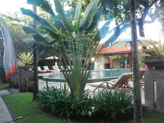 Adhi Jaya Hotel : pool