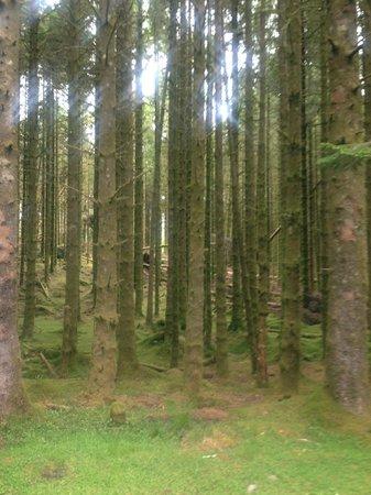 Ardanaiseig Hotel: Forest