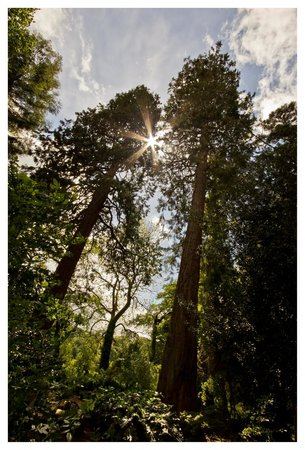 Dunster Castle: Englands Tallest Tree