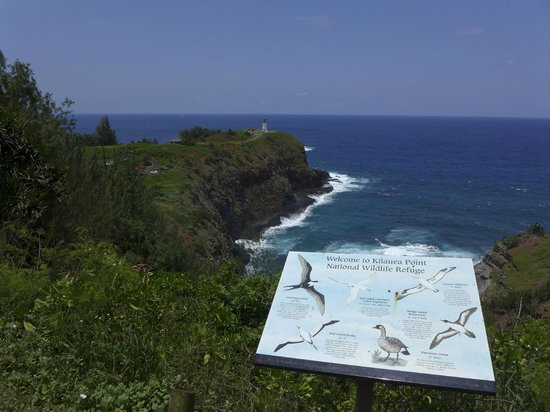 Kilauea Point National Wildlife Refuge: looking over the reserve