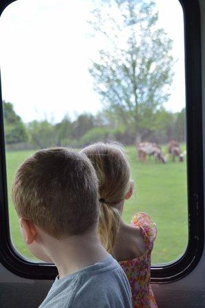 African Lion Safari: Viewing Safari from comfort of bus