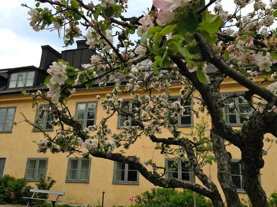 Hotel Skeppsholmen: Flowering trees in the garden