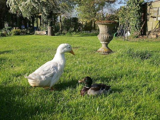 Hope Cottage Tours: Hope Ducks